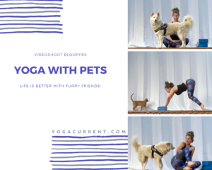Yoga With Pets Postcard - Pinterest Facebook Patreon - Courtney Bell Yoga Current